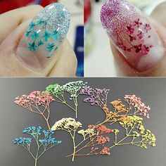 10 Colors 3D Decoration Real Dry Dried Flower for UV Gel Acrylic Nail Art Tips    eBay