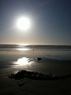 Oregon Coastline Window Panes, Oregon Coast, Seashells, Pacific Northwest, North West, Coastal, Sunset, Beach, Places