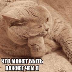 Chill Wallpaper, Cute Backgrounds For Iphone, Hello Memes, Russian Memes, Cute Love Memes, Funny Video Memes, Fun Live, Animal Memes, Cute Cats