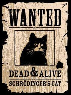 Wanted: Dead AND Alive - Schroedingers Cat                                                                                                                                                                                 Mehr