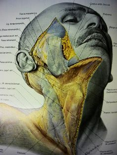 """Topographische Anatomie des Menschen 'Volume One: Head & Neck' Eduard Pernkopf [ed.]  (Atlas of Topographical and Applied Human Anatomy)  // """"the Pernkopf atlas"""" //"""