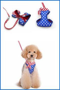 dog stuff,dog ideas,dog care,dog tips,dog grooming Dog Control, Led Dog Collar, Sick Dog, Dog Safety, Guide Dog, Dog Jewelry, Dog Wedding, Dog Costumes, Dog Birthday