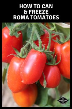 Roma tomatoes are also known as Italian or plum tomatoes. With their prolific yields of meaty, sweet fruit, they make the ideal tomato for sauces, canning and freezing. Freezing Tomatoes, Freezing Vegetables, Growing Tomatoes In Containers, Canning Tomatoes, Roma Tomatoes, Plum Tomatoes, Tomatoes Image, Veggies, Gardening Vegetables