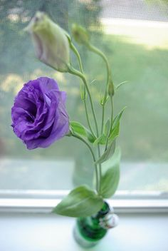 Lisianthus