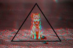 // △ // wolf //