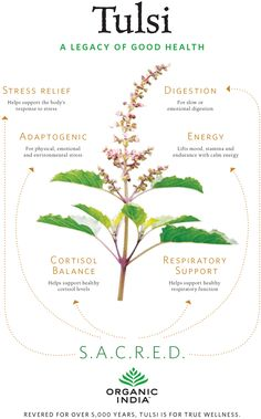 Revered for over 5,000 years, Tulsi is one of the most cherished and legendary health-supporting herbs. It has been used to balance many common health challenges, from managing stress to supporting the immune system to lifting mood and energy. As a powerful adaptogen, Tulsi is all about providing balance. Yet here in the west, Tulsi is largely unknown. So we made this handy graphic to show people why Tulsi is the most important herb they might not have heard of. And it's delicious! We m...