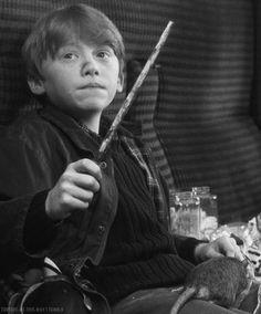 Little Rupert ❤️ o-o