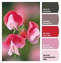 Heirloom Sweetpea - CNH - ColorSnap