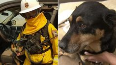 "Dozens of pets rescued from Blue Cut Fire still unclaimed | DOZENS OF PETS RESCUED FROM BLUE CUT FIRE STILL UNCLAIMED SAVE A DOG..SAVE A VETERAN. BUY A PACK-BUDDY T-SHIRT OR HAT AND ""SAVE A DOG AND SAVE A VETERAN"".  PACK BUDDY RAISES FUNDS FOR TRAINING RESCUE/SHELTER DOGS TO SERVE AS SERVICE DOGS FOR CIVILIANS AND, FREE, FOR U.S. VETERANS. www.Pack-buddy.com (Veteran Support) 1-760-321-1683"