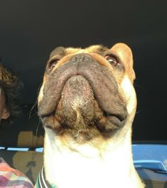 The train is coming. TheeRak,the french bulldog❤️❤️