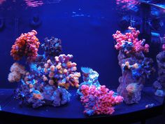 See more in the All Things Aquaria board: https://www.pinterest.com/JibinAbraham/all-things-aquaria/  Awesome nano tank with sun corals - Reef Central Online Community