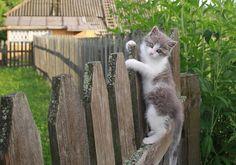 картинка Кошки