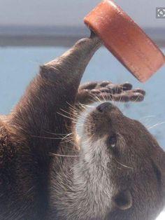 Otter playtime