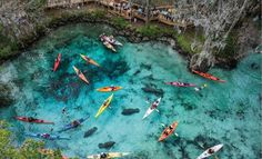 Three Sisters Spring, Crystal River, FL - Swim Kayak with Manatees - Not open Nov-Mar.
