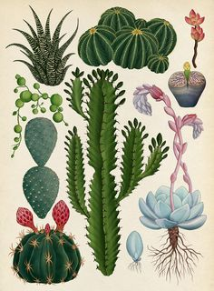the botanical drawings of katie scott                                                                                                                                                                                 More