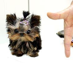 I need this little creature lol