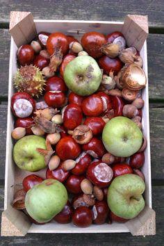 Eine Kiste voll Herbst