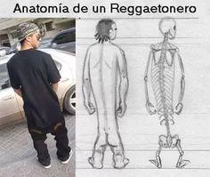 fotos de risa anatomia reggaetonero