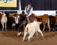 Haidas Smoothie - breeding information, stallion directory, studbook. Doc Bar, Derby Winners, Veterinary Services, World Championship, Calgary, Smoothie, Guy, Horses, Animals