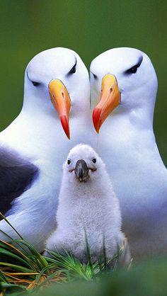 bird_nest_nestling_beak_