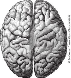 Anatomical Brain Drawing - 4  by BestVector