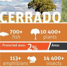 Cerrado Infographic