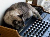Cat Asleep On A Mixer