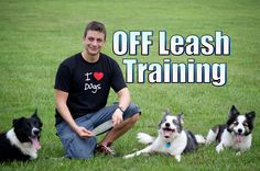 Essentials of Dog Obedience Training - Tips for Training Your Dog Dog Clicker Training, Leash Training, Training Your Puppy, Dog Training Tips, Crate Training, Potty Training, Training Schedule, Blue Merle, Dog Minding