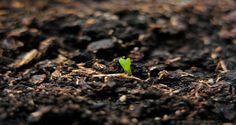 Tohum Demek, Gelecek DemekAsırlardır tarım geleneğini barındıran topraklarımızda yetişen ürünler, nesiller boyu uzanan birer miras olma özelliğinde olup yaşamın sürekliliğini simgelerler..    Binlerce yıldır değişen çevre koşullarına rağmen günümüze kadar ulaşmış olan genetik hazinemiz artık tehlike altında..