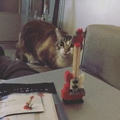« #nanoblock #guitar #cat »
