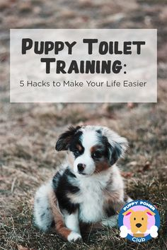 Puppy toilet training hacks than can help make your life easier. Check out these hacks on how to potty train your puppy to pee the right way. Unique Female Dog Names, Puppy Names Unique, Puppies Names Female, Puppy Toilet Training, Puppy Obedience Training, Training Your Puppy, Dog Training Tips, Training Classes, Girl Dog Names