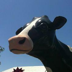 Mega fair cow