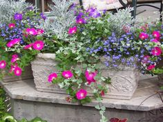 Front Porch Container Gardens | Container gardening - Lovely combination of flowers and colors.