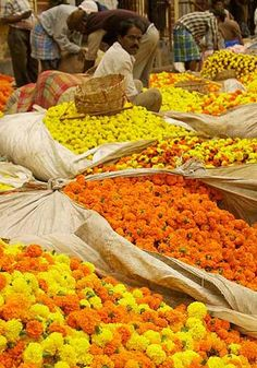 A Marigold market in India.The Marigold is one of the most cultivated flowers in all of India, the hub of cultivation being Calcutta. The fields of marigold growing are breathtaking. The shades of yellow are so bright, that when you stand next to them they create a reflection that turns your skin to gold.