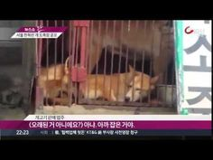 Thank you for signing our petition. We mailed the petition signature package with 55K signatures to the Seoul Mayor Park Won-Soon and his city's Animal Protection Department on July 3, 2017 via U.S. International Priority mail. This petitions will remain open until Seoul close down their dog and cat meat industry. So please keep signing and sharing. Thank you so much, for your support. Also please send in your own letter.  You can use our petition text as sample letter or use your own words…