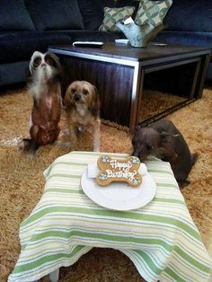 Barkley Bailey and Brody brodys Birthday