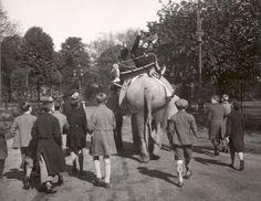 Kinderen maken een ritje op de rug van een olifant in dierentuin Diergaarde Blijdorp. Nederland, Rotterdam, datum onbekend.