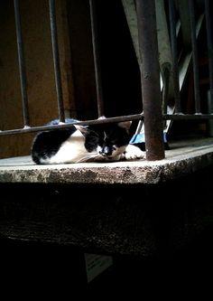 cat : shibuya
