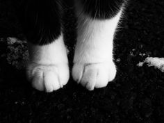 cat photography cute fluffy Black and White white black animal ...