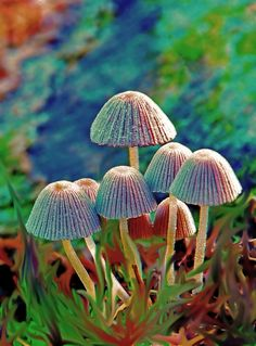 mushroom in wonderland by Minh Hoang-Cong, via 500px