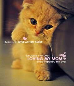 Cute cute cute! Happy Mother Day ♥ LOVE YOUR MOM ♥ @ zodomo
