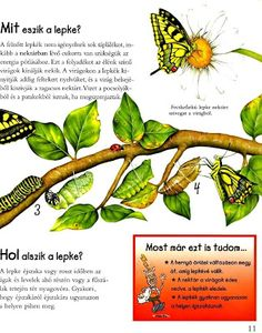 Picasa Webalbumok Bugs And Insects, Nature Study, Ale, Butterflies, Environment, Science, Fruit, Children, Picasa