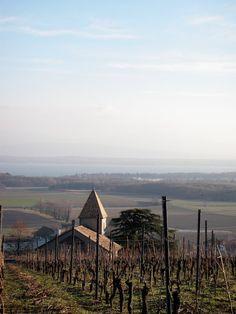 Hike through the vineyards of Switzerland.