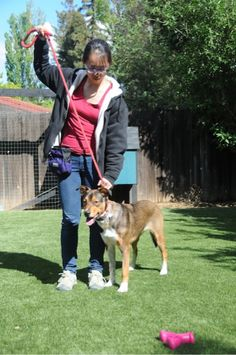 Take The Lead, Safely! Leash Walking Skills Every Human Needs to Know | Animal Behavior and Medicine Blog | Dr. Sophia Yin, DVM, MS