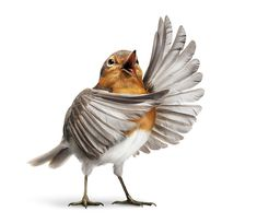 """Opera Bird.....""""Whether therefore ye eat, or drink, or whatsoever ye do, do all to the glory of God! """"  I Corinthians 10:31 : )"""