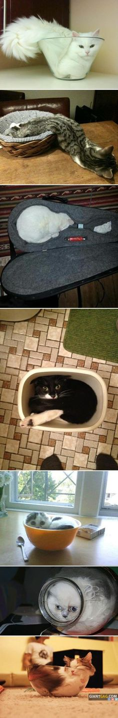 Cats Are Everywhere Compilation, Click the link to view popular images!