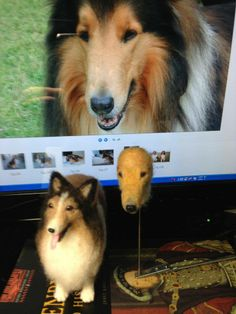 """Needle felted my rough collie """"Gionzzino"""" made in progress by my friend on 10 Aug. '13"""