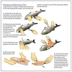this is a link to 48 things every man should know- this graphic of fish cleaning is pretty much how I was taught