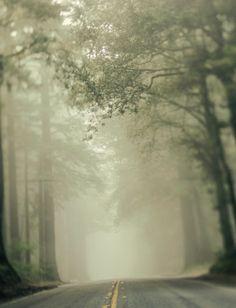 Nature Photograph - Trees, Green, Fog, California - The Road We Take 8x10. $30.00, via Etsy.