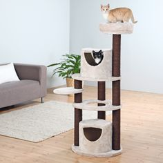 Give you kittens and cats a place to climb, scratch, play, and sleep with this fun-filled cat tree and cat house combination. Multiple sisal scratching posts provide plenty of places for your kitten t